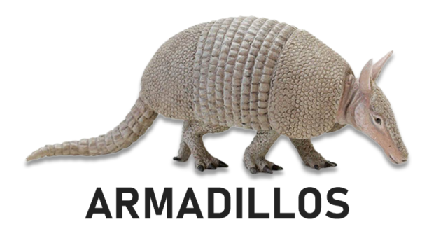 HOW TO GET RID OF ARMADILLOS #WIKIJUNKIE
