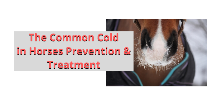 Photo of The Common Cold in Horses  Prevention and Treatment