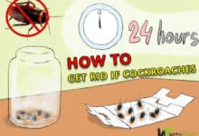 Photo of 6 Easy Ways to Get Rid of Cockroaches